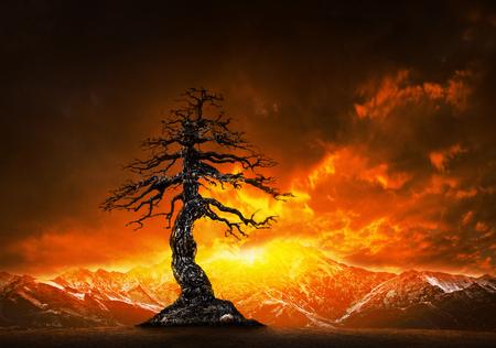 死んだ木の枝と snowcaped 山の背後にあるカラフルな空