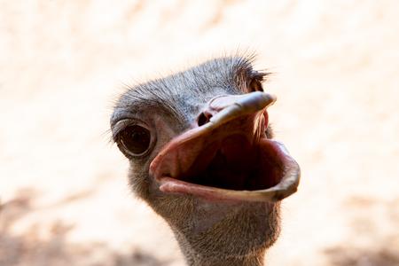 grappig gezicht van struisvogel met brede mond