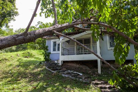 falling tree after hard storm on damage house Standard-Bild