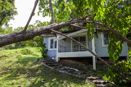 falling tree after hard storm on damage house Stock Photo
