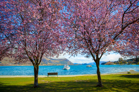 pink flower blooming in lake wanaka south land new zealand Stock Photo