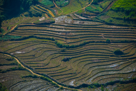 aerial view of rice terrace in sapa northern of vietnam
