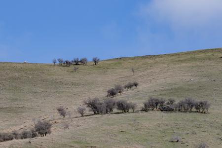 ニュージーランド南部の羊農場の風景 写真素材
