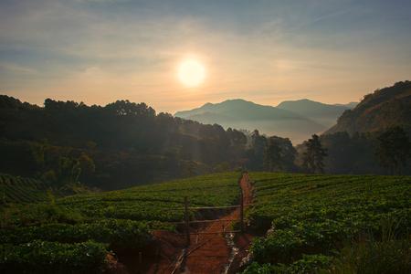 beautiful sun rise in doi ang khang chiang mai northren of thailand