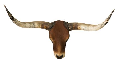 赤い雄牛の頭とホーン孤立した白い背景