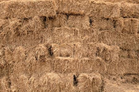 oogsten van rijststro voor binnenlands vee in landelijk van Thailand Stockfoto