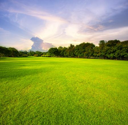 朝の空の背景に対して美しい緑の草原の公共公園 写真素材