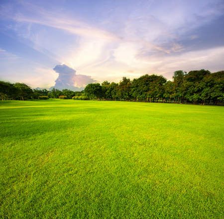 beautiful green grass field public park against morning sky background 스톡 콘텐츠
