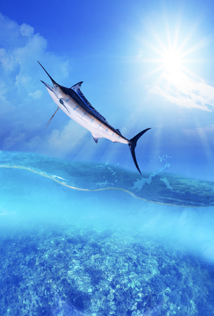 blue marine fish flying over sea water level