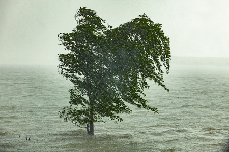 hard strom raining blowing mangrove tree in sea coast