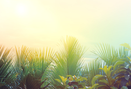 natural green palm leaves  and light of sun rising background 스톡 콘텐츠