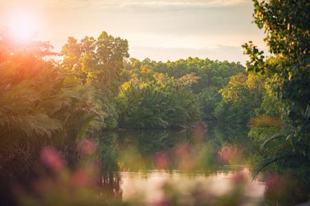 natural morning light in magrove wet land forest Stock fotó - 99165482