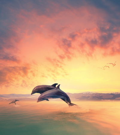 imaging scene of dolphin jumping through sea water Stok Fotoğraf - 99375391