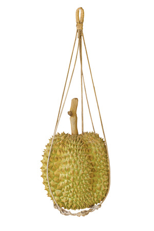 durian fruit hanging in bamboo basket isolate white background