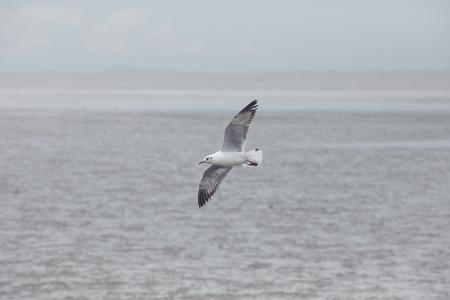 one sea gull bird flying over plain sea coast 写真素材