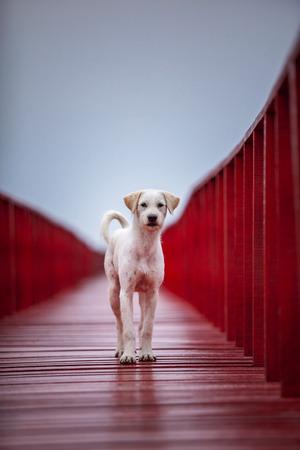 homeless dog on red beach pier Stock fotó