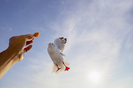 human hand feeding sea gull bird mid air