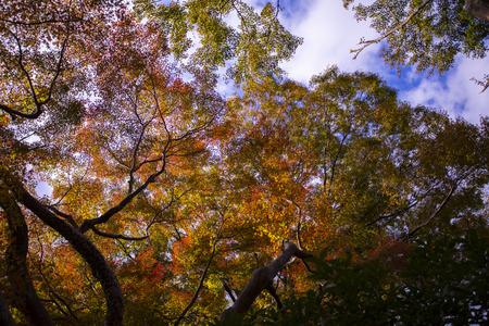 colorful of autumn leaves osaka japan