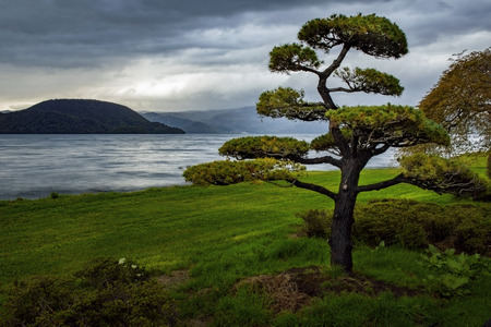 arranging of pine tree with rainy day at lake toya hokkaido japan Stock Photo - 113429382