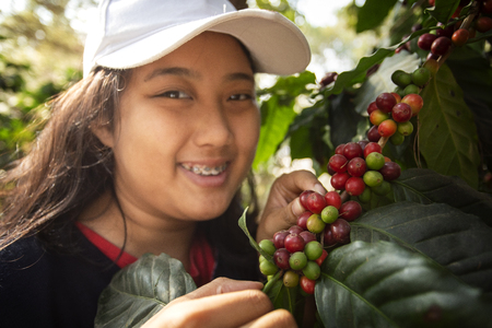 toothy smiling face of younger asian teen woman harvesting fresh arabica coffee seed in coffee plantation