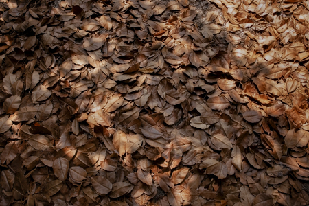 dry tree leaves on park ground as natural background
