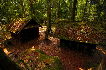 rote Ahornblätter in Phu Hin Rongkla Nationalpark Pitsanuloke Provinz thailand Standard-Bild