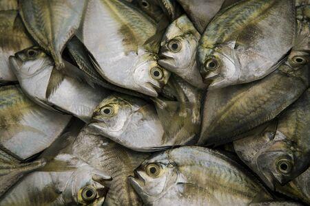 dozen of fresh sea fish ready of food making in thailand fresh market Zdjęcie Seryjne