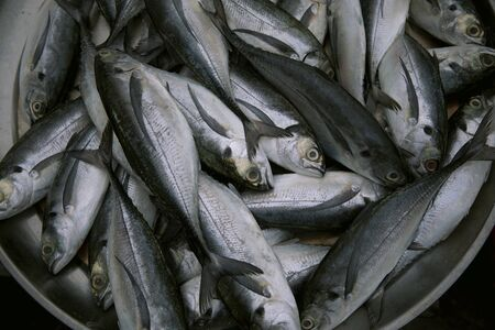 fresh marine fish preparing for food in fresh market