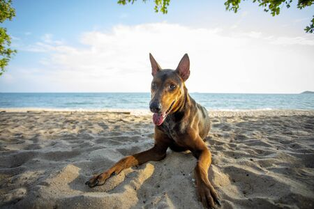 street dog lying with relaxing on sand beach