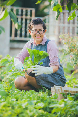 toothy smiling face of asian woman harvesting organic vegetable Stock fotó