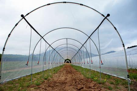 open door  green house for plantation