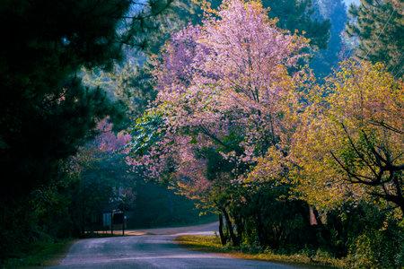 beautiful scenic of doi angkhang chiang mai thailand