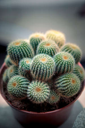 close up group of beautiful cactus in little pot