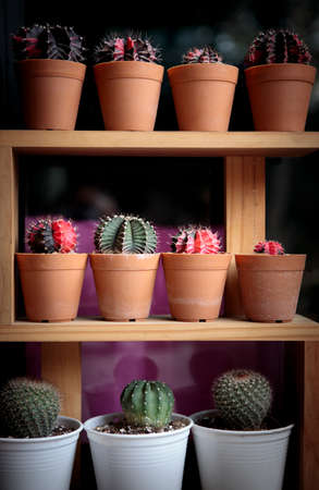 stack of cactus pot on wooden shelf