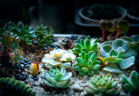 beautiful succulent planting in little garden Stock fotó