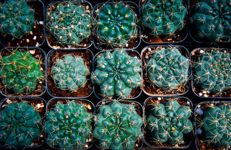 top view stack of cactus in planting pot