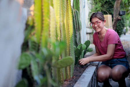 asian woman planting cactus at home fence