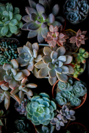 top view of beautiful succulent in planting pot Stock fotó