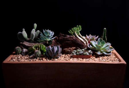 beautiful succulent plant arranged in planting pot