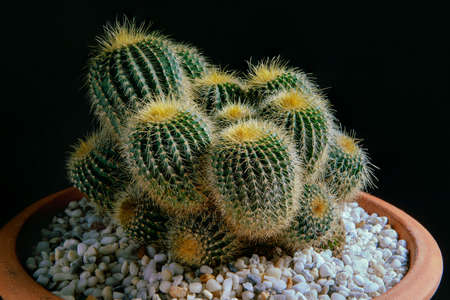 studio shot of beautiful cactus in clay pot Stock fotó