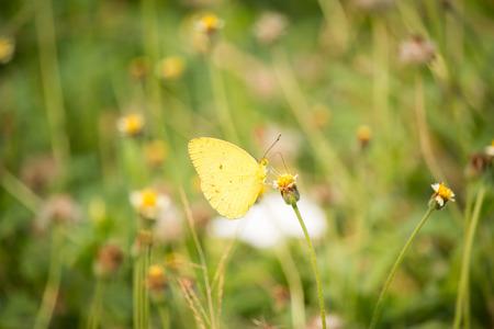 yellow: Yellow Butterfly Stock Photo