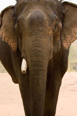 generality: Generality of elephant in asia