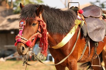 de dressing van bruin paard Stockfoto