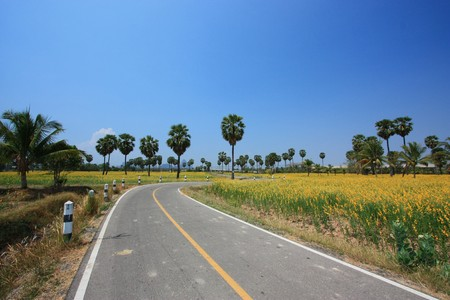 plentifully: the road in yellow flower field