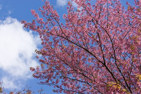 plentifully: very pink flower blossom in blue sky