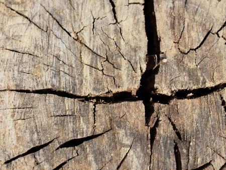 radius: wood radius under the sun
