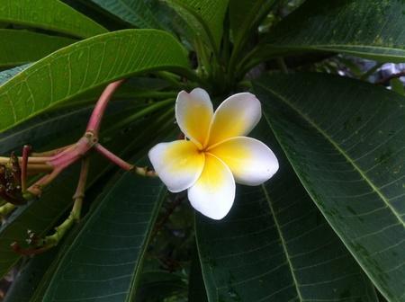 colour: Beautiful flower Stock Photo