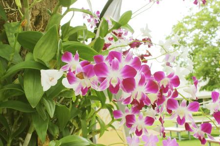 orchidea: Beautiful orchid flower