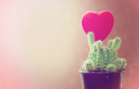 Red heart in the cactus flowerpot,for valentine day card Banque d'images