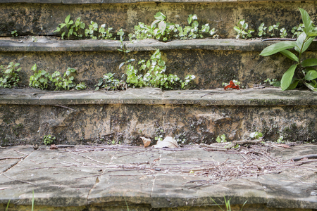 Old stone stairs with trees.